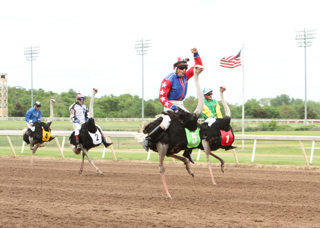 Extreme Racing Ostrich